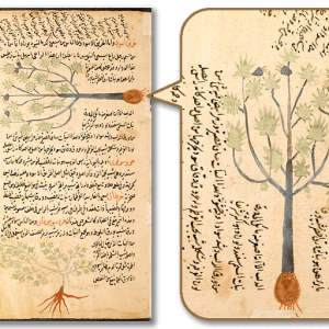 『Work on botany in Arabic』MS 583H-p89