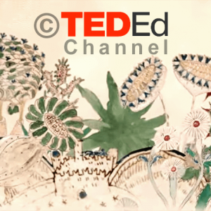 TED Ed Animation - The worlds most mysterious book - Stephen Bax