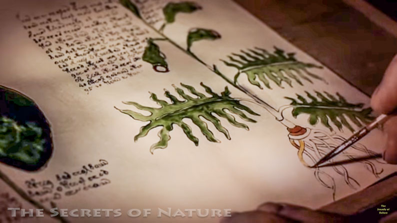 Wriging The Voynich Manuscript